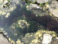 江の島の写真・動画_image_268660