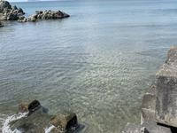 森戸海岸の写真・動画_image_270162