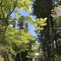 円覚寺の写真・動画_image_270754