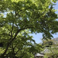 円覚寺の写真・動画_image_270755