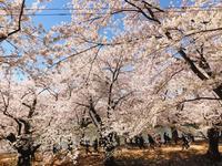 弘前公園の写真・動画_image_273994