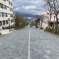 八幡坂の写真・動画_image_274824