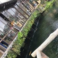 忍野八海の写真・動画_image_279490