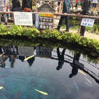 忍野八海の写真・動画_image_279491