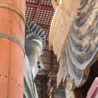 東大寺の写真・動画_image_279662