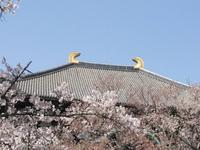東大寺の写真・動画_image_279666