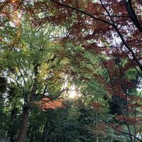 清澄庭園の写真・動画_image_279816
