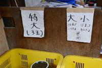 宮川製麺所の写真・動画_image_280328