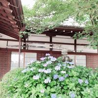藤森神社の写真・動画_image_290341