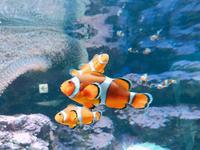サンシャイン水族館の写真・動画_image_294067