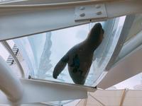 サンシャイン水族館の写真・動画_image_294077