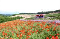 四季彩の丘の写真・動画_image_301470
