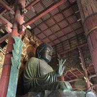 東大寺金堂(大仏殿)の写真・動画_image_302081