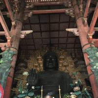 東大寺金堂(大仏殿)の写真・動画_image_302085
