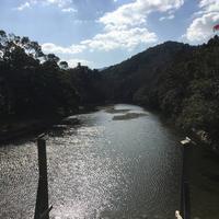 伊勢神宮の写真・動画_image_308859