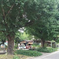 日比谷公園の写真・動画_image_309829
