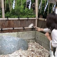 葛原岡神社の写真・動画_image_315132
