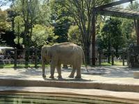上野動物園の写真・動画_image_319743