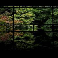 瑠璃光院の写真・動画_image_319761