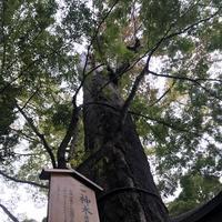 氷川神社の写真・動画_image_321341