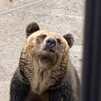 旭川市 旭山動物園の写真・動画_image_321395