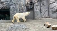 旭川市 旭山動物園の写真・動画_image_322091