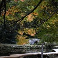 尾山神社の写真・動画_image_327647