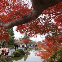 清水寺の写真・動画_image_328165