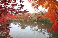 永観堂(禅林寺)の写真・動画_image_328183