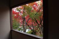 永観堂(禅林寺)の写真・動画_image_328185