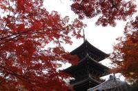 真如堂(真正極楽寺)の写真・動画_image_328196