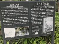 白糸の滝の写真・動画_image_330462