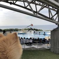 沖縄美ら海水族館の写真・動画_image_331043