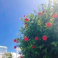 瀬長島ウミカジテラスの写真・動画_image_331996