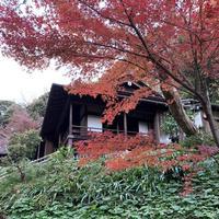 三溪園の写真・動画_image_333341