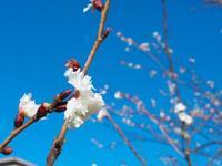 元興寺の写真・動画_image_335924