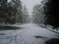京都御苑の写真・動画_image_336178
