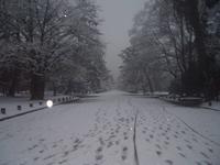 京都御苑の写真・動画_image_336179