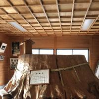 国造神社の写真・動画_image_338436