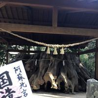 国造神社の写真・動画_image_338438