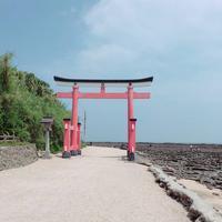 青島神社の写真・動画_image_339070