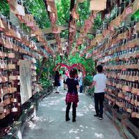 青島神社の写真・動画_image_339071