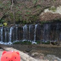 白糸の滝の写真・動画_image_339131