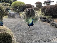 伊豆シャボテン公園の写真・動画_image_340303