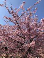 代々木公園の写真・動画_image_348712