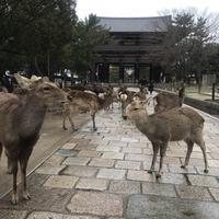 東大寺の写真・動画_image_349203