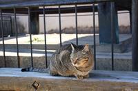 猫の細道の写真・動画_image_349319