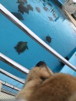 海洋博公園の写真・動画_image_350761