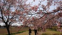 北浅羽桜堤公園の写真・動画_image_352923