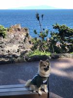 城ヶ崎海岸の写真・動画_image_356663